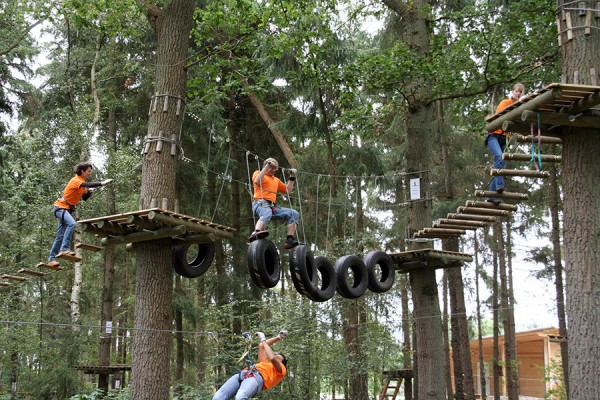 HIGH ROPES STAGS