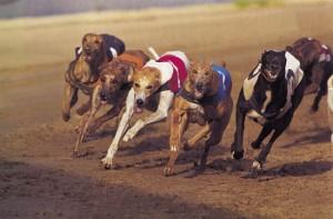 greyhoundgroup